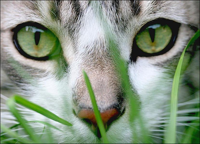 Gato entre plantas