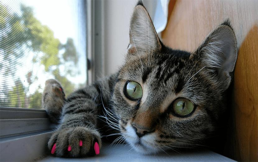 gatos-unas-postizas