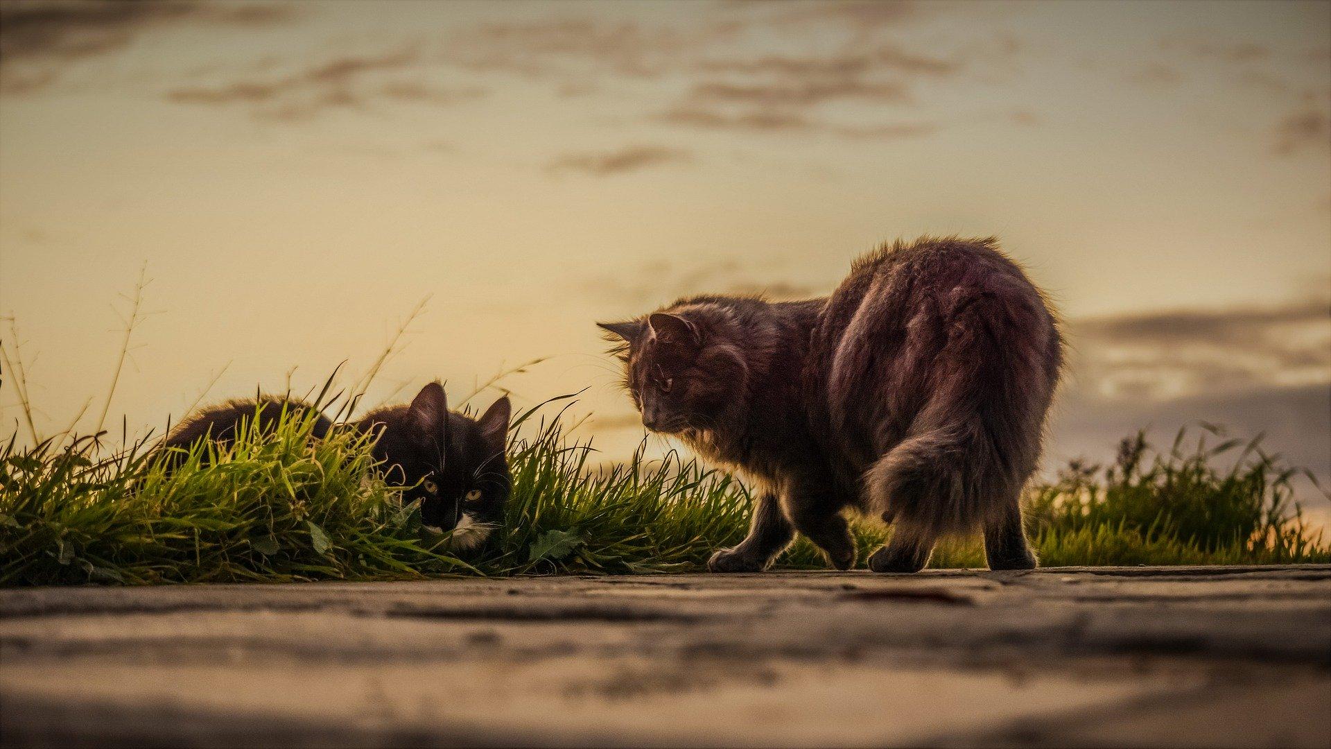 Pon a tu pareja de gatos nombres bonitos