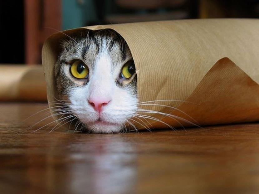 Gato en una bolsa de papel