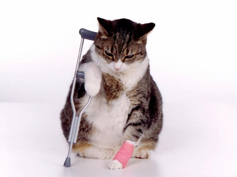 Gato fracturado