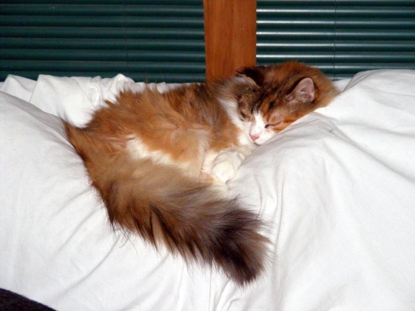 Gato descansando en una cama