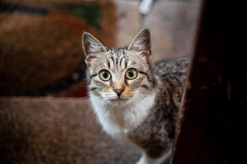 Gato sin conjuntivitis