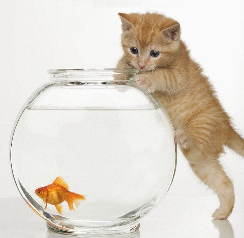 Gato pescando