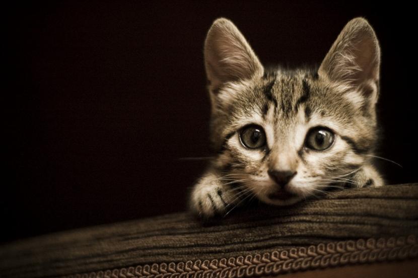 Gato alerta