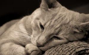 gatito enfermo