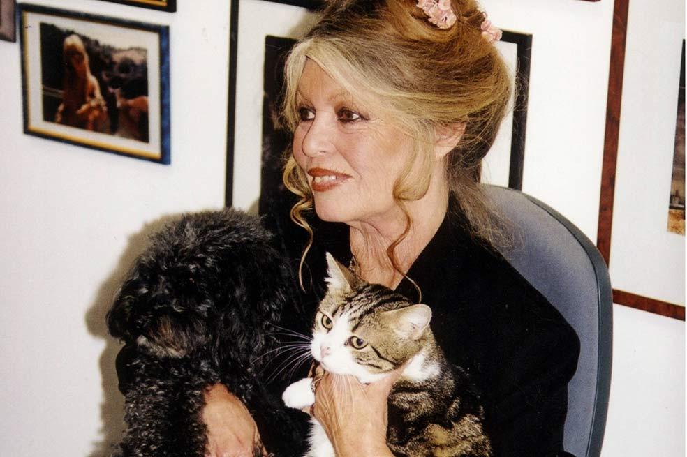 Brigitte Bardot defiende a los gatos de Oviedo