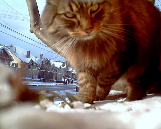 Una de las tomas del gato Cooper