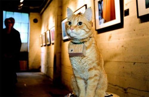 El gato Cooper en una de sus exposiciones