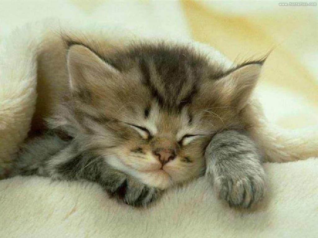 Técnicas de masaje para gatos