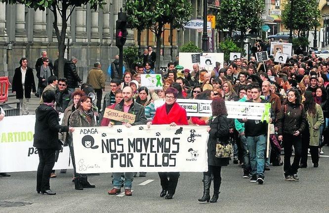 Manifestación en Oviedo en defensa de los gatos callejeros