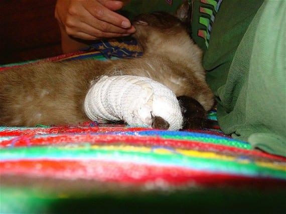 Quemaduras en gatos