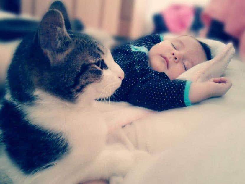 Gato con niño durmiendo