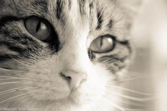 ojos del gato