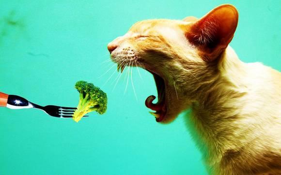 Gato comiendo verduras