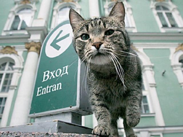 Dia del gato en el Museo del Hermitage