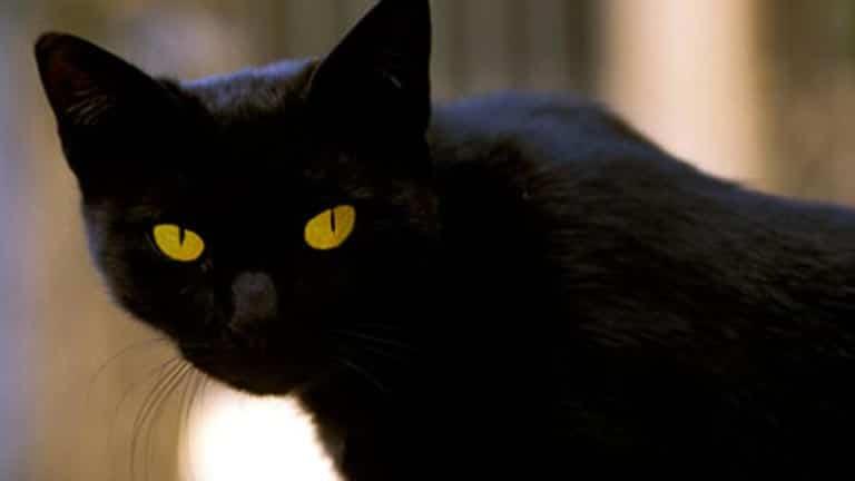 Tomassino, el gato mas adinerado de Roma