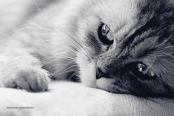 La enfermedad del tifus en los gatos