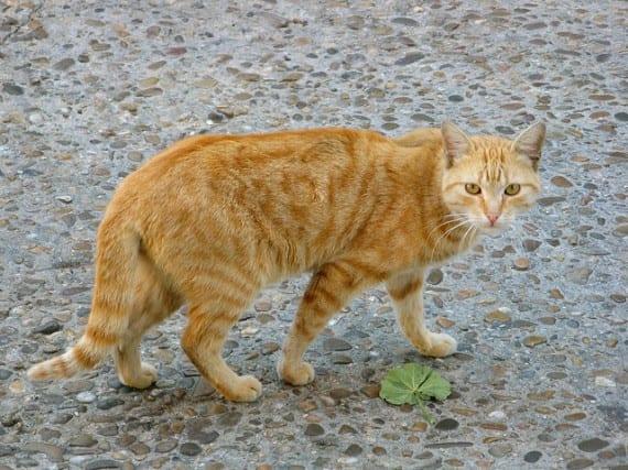 Un gato que Aparicio después de 15 años