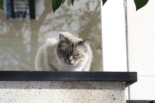 Reiki en gatos