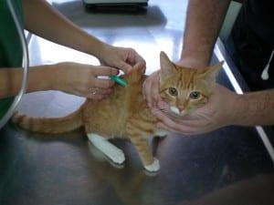 Síntomas de enfermedades en los gatos
