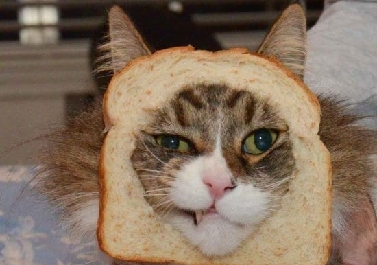 Foto de un gato empanado