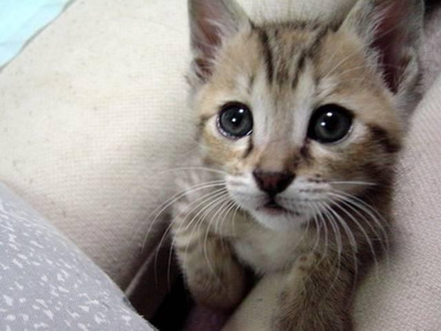 Gatito triste por divorcio de sus dueños