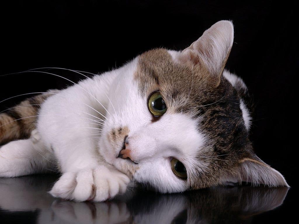 Gatito triste por la separación de sus dueños