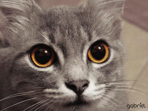 adiestrar gato