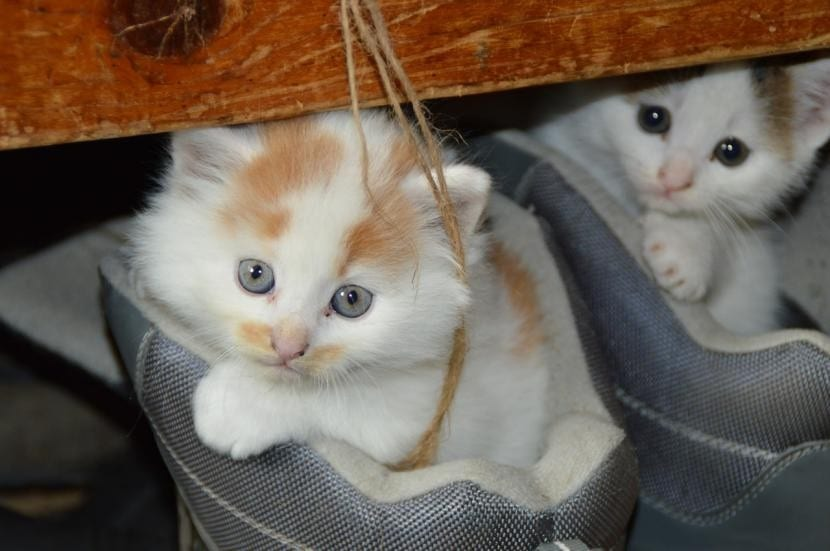 Gatos pequeños
