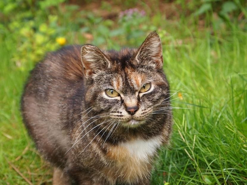 Evita que tus vecinos te denuncien por molestias causadas por tu gato en el campo