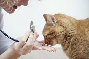 Lleva a tu gato al veterinario si sospechas que tiene anemia