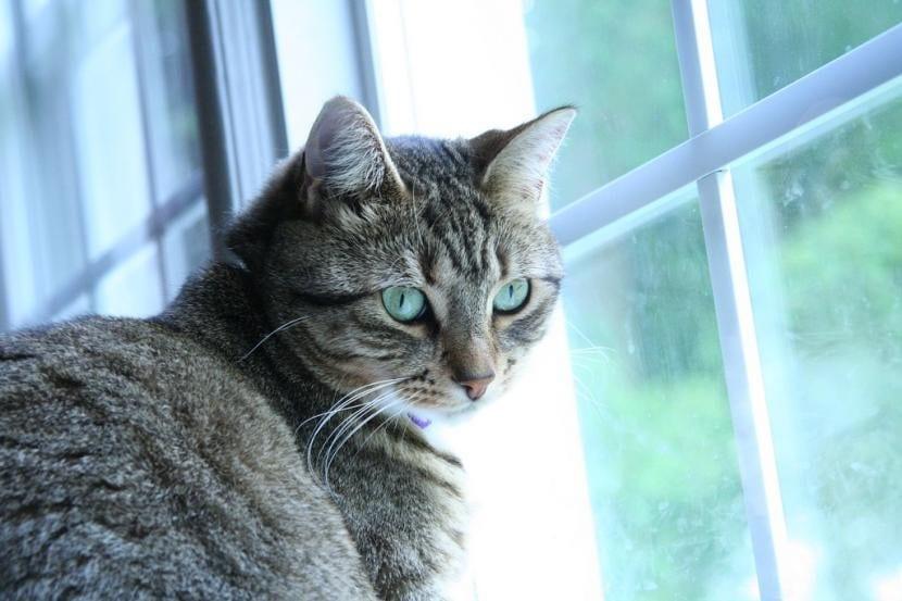 Gato que se escapa por la ventana