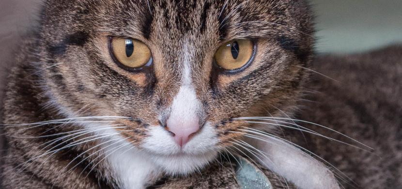 Gato que puede haber sido envenenado