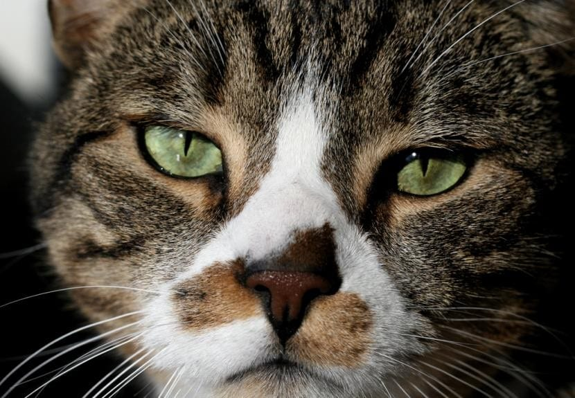 Gato triste que se ha escapado