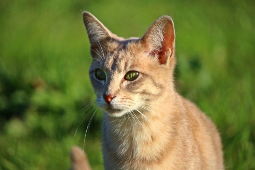 Los gatos son cazadores por naturaleza