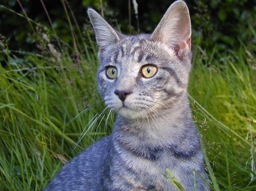 C mo mantener a los gatos alejados del jard n for Ahuyentar gatos jardin