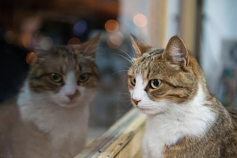 Ventana de casa cerrada para que no se escape el gato