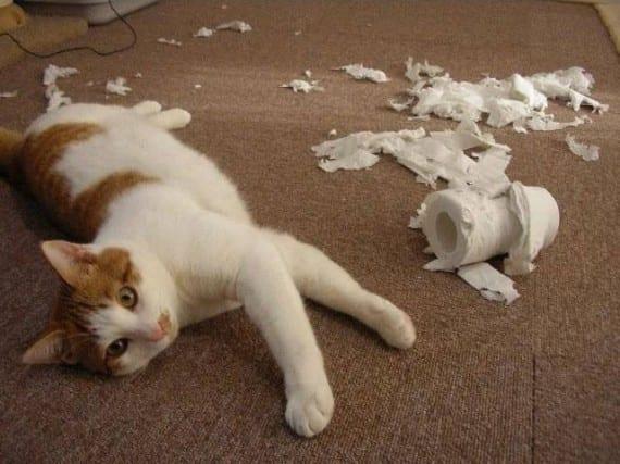 gatos que resguñan