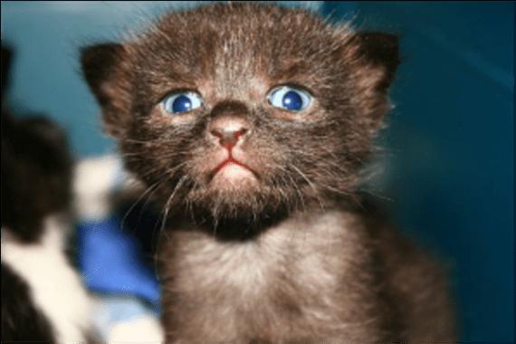 gatos estresados