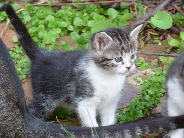 diarrea en gatitos