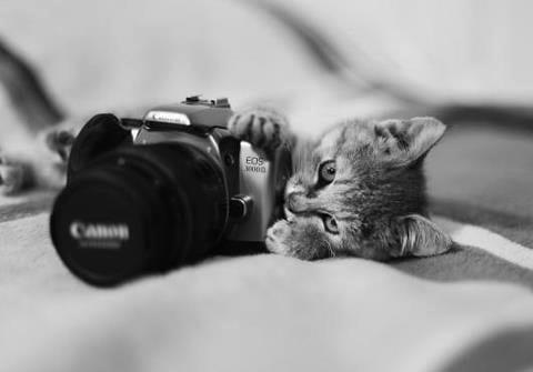 fotografias gatos