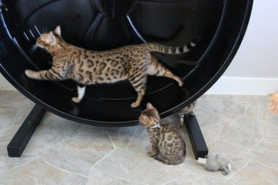Cat Wheel Company
