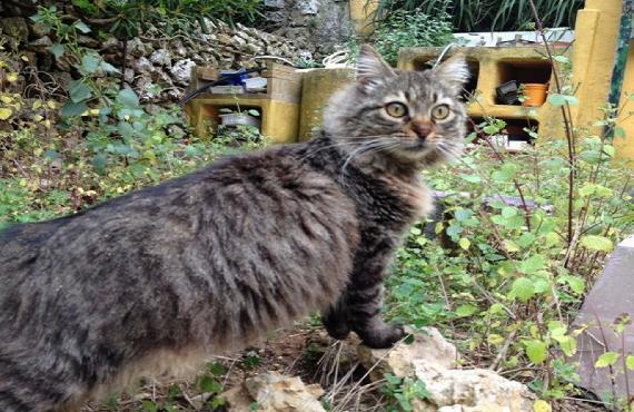 Oshi curioseando en el jardín