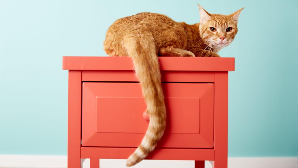 Los gatos utilizan su cola para comunicarse