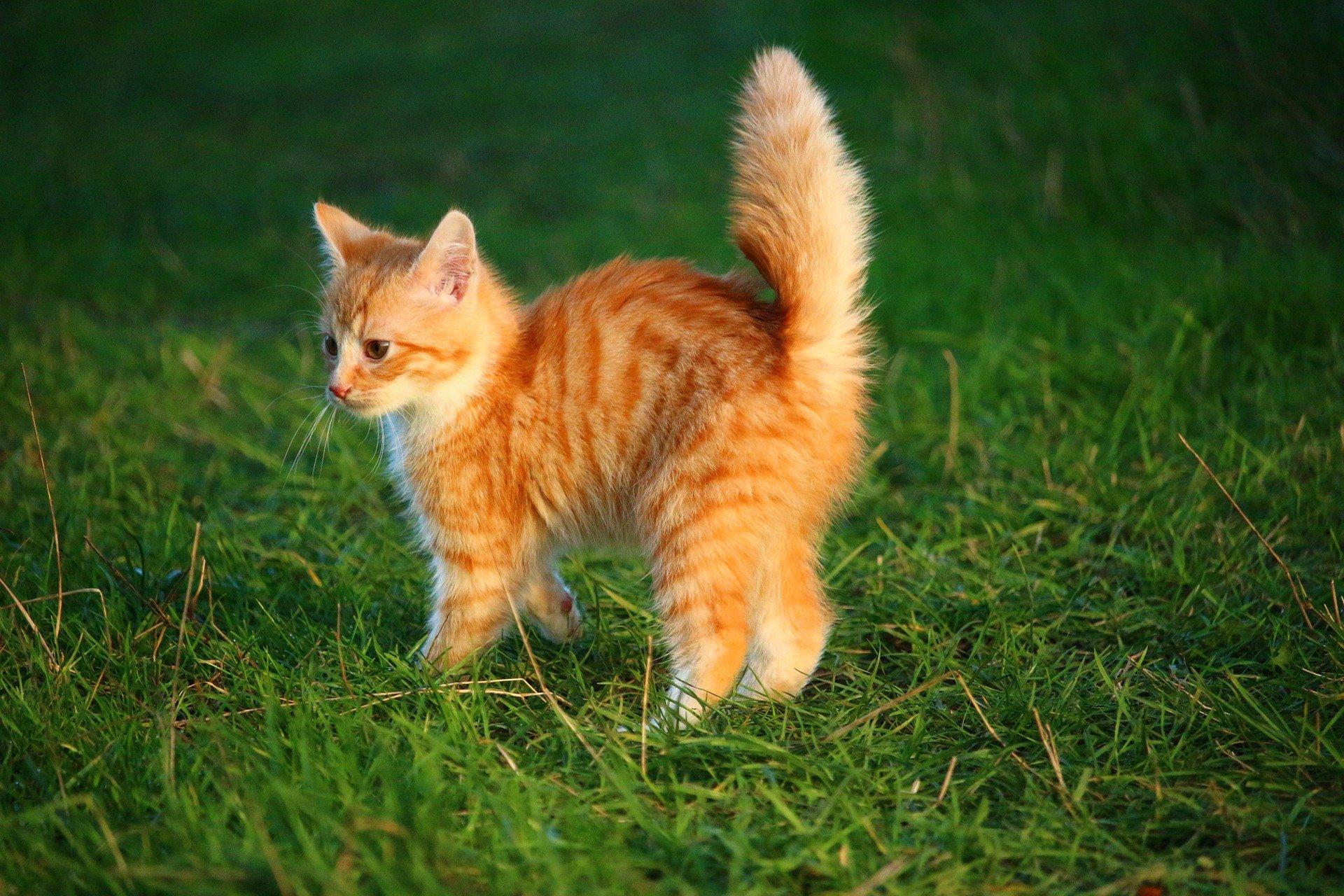 Los gatitos aprenden rápido a usar su cola