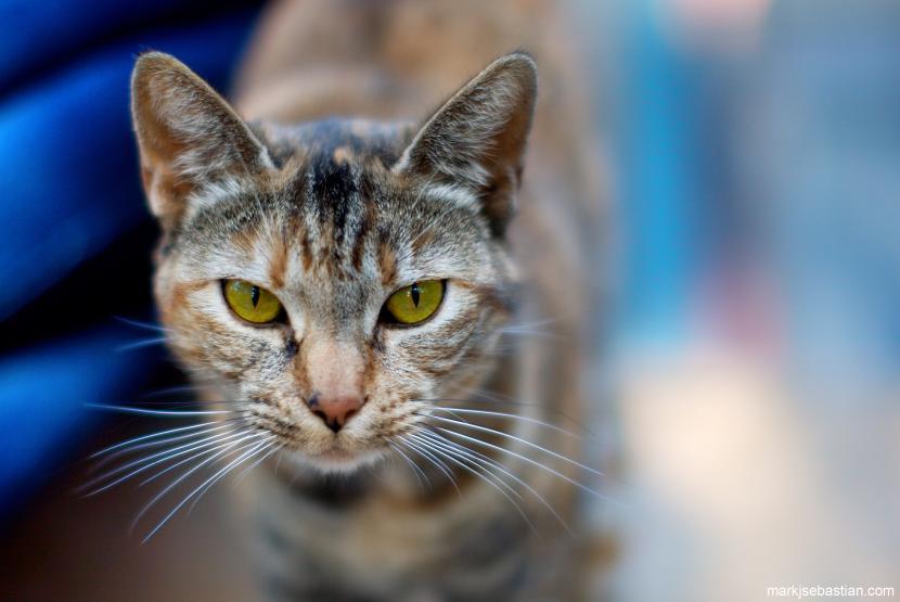 Gato con tercer párpado