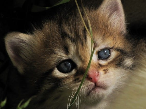 https://www.notigatos.es/un-gato-sobrevivio-milagrosamente/