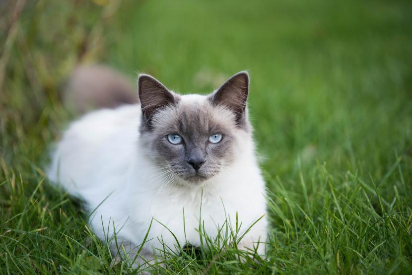 Gato envenenado en el jardín