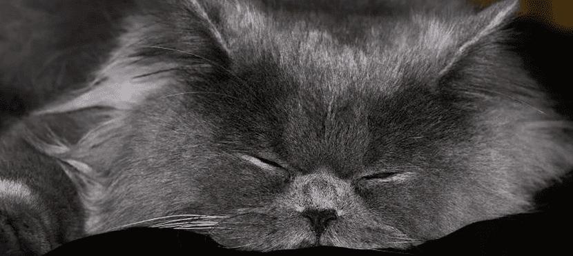 pelos-de-gato